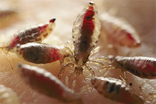 Существуют заговоры не только для борьбы со вшами, но и против других домашних насекомых