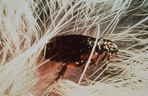 Современные инсектицды эффективно воздействуют на блох и при этом относительно безопасны для человека и животных.