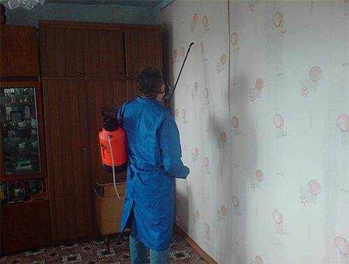 СЭС Санкт-Петербурга вполне успешно борется с клопами в квартире