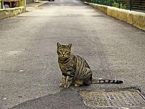 Противоблошиные ошейники особенно хорошо подойдут для защиты от блох котов, часто гуляющих на улице.