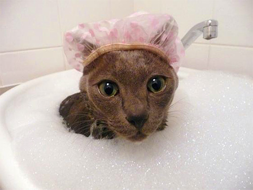 При использовании шампуня от блох нужно следить, чтобы он не попал в глаза и рот животного.