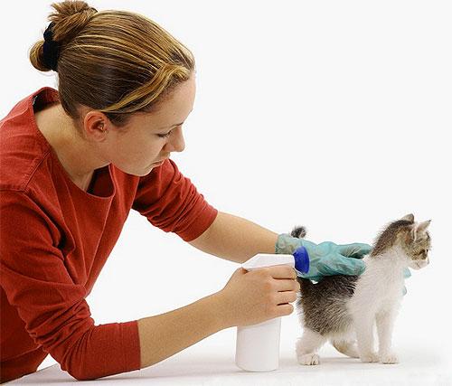 При обработке спреем от блох нужно раздвигать шерсть котенка и стараться не попасть ему в глаза и в рот