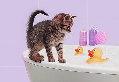 Инсектицидный шампунь вспенивается так же, как и обычный, и наносится на тело котенка