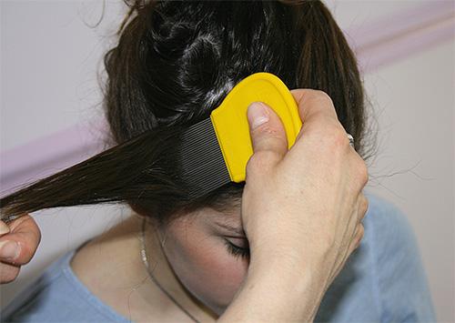 После обработки головы спреем или шампунем следует вычесать вшей при помощи специального гребня, прядь за прядью.