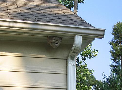 Для своего гнезда шершни выбирают укромные места, где тепло и отсутствуют сквозняки