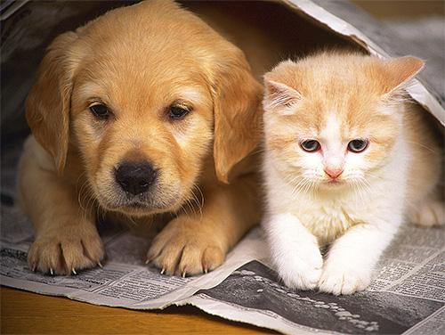 Клопы могут начать кусать домашних животных в квартире, если люди уезжают из нее на долгий срок.