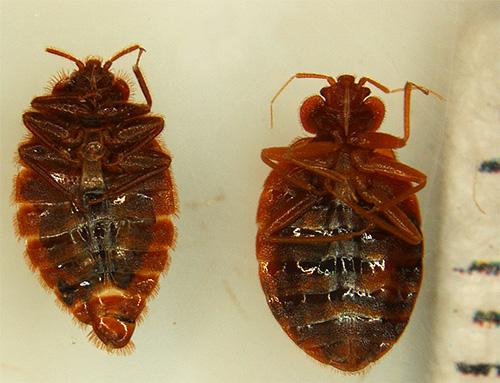 При контакте с инсектицидами у насекомых быстро наступает паралич, после чего они погибают