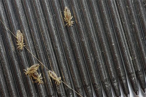 Для использования анисового масла в комплексе с гребнем его нужно нанести на влажные волосы и начать вычесывание