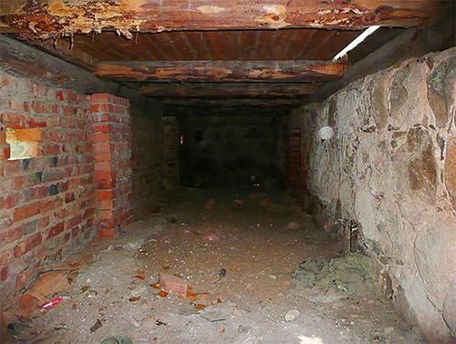 В квартирах на первом этаже часто могут появляться блохи из подвала
