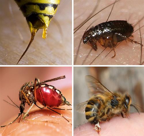 При укусах некоторых насекомых очень важно суметь правильно оказать первую помощь пострадавшему, чтобы избежать серьезных последствий для его здоровья