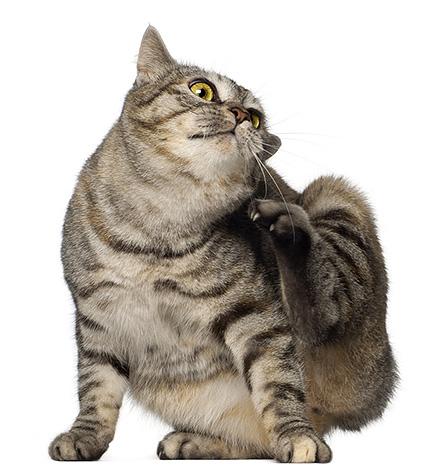 Обычно блох в квартиру с улицы приносят домашние животные.