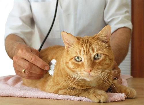 При выраженной реакции на инсектицидные средства у питомца нужно показать его ветеринару
