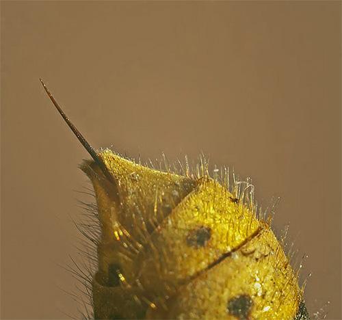 Если вы столкнулись в своей жизни с нападением шершня, то вовсе не удивительно, что и в ваших снах это насекомое будет представлять собой символ угрозы.