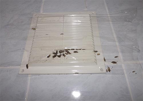 На фото показан пример заклеенной скотчем вентиляции, через которую мокрицы проникали в квартиру с чердака.