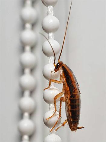 Тараканы могут проникать в помещение по вентиляции от соседей.