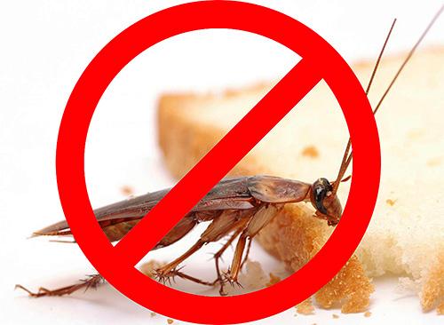 Перед началом уничтожения насекомых в помещении полезно предварительно познакомиться с особенностями этой процедуры, чтобы она была действительно эффективной и при этом безопасной для жильцов квартиры.