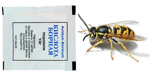 Борная кислота токсична не только для тараканов, но и для ос, поэтому на ее основе можно готовить отравленные приманки.