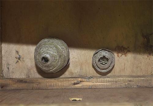 Прежде чем убирать ведро с водой, убедитесь, что осы уже мертвы.