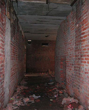 Довольно часто блохи могут появиться в квартирах из подвала дома, где они массово размножаются.