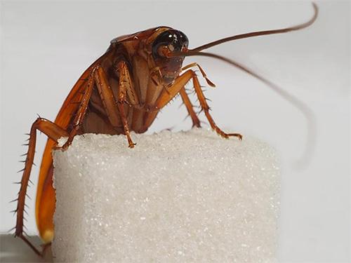 Если вас одолелы тараканы - специалисты Клоп Контроль весьма быстро от них избавят, причем с высокой вероятностью этих насекомых вы уже не увидите как минимум год.