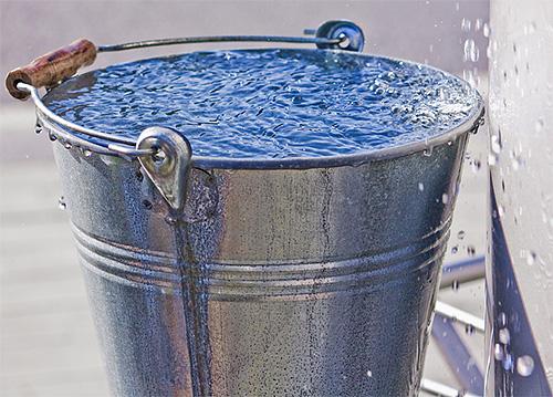 Одним из самых доступных средств для уничтожения шершней является вода, в ведре с которой можно попросту утопить гнездо.
