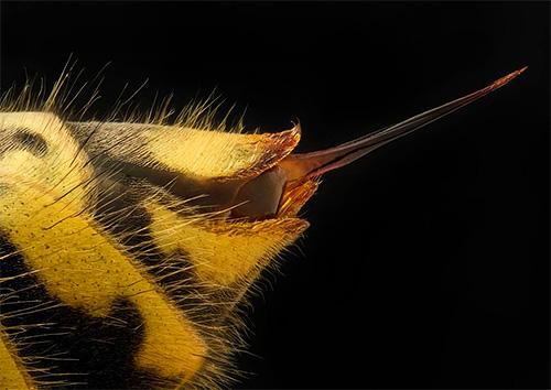 Сразу после укуса осы важно снизить скорость распространения яда и уменьшить интенсивность отека