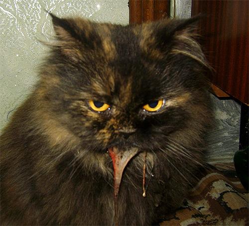 Тревожным признаком является рвота у кошки, возникающая через некоторое время после укуса насекомого.