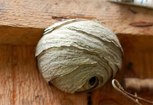 В отдельных случаях оптимальным способом борьбы с осами на участке будет непосредственное уничтожение их гнезда.