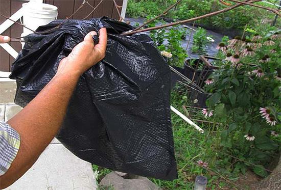 Инсектицид наливается в пакет, которым оборачивается осиное гнездо.