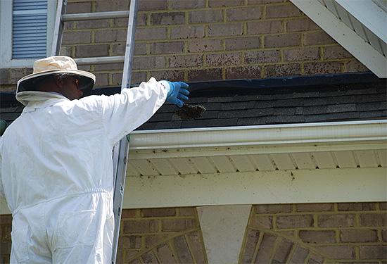 Специалисты (дезинсекторы) помогут быстро избавиться от осиного гнезда.
