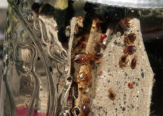 Использование в препарате Ксулат Микро сразу трех инсектицидов не дает возможности выработки в популяции насекомых устойчивости к средству.