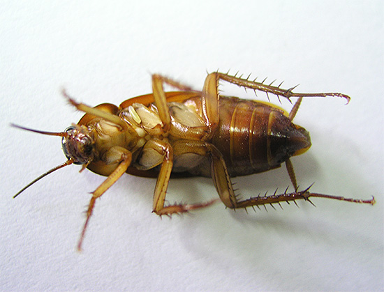 Остается лишь периодически вытряхивать из ловушки мертвых насекомых