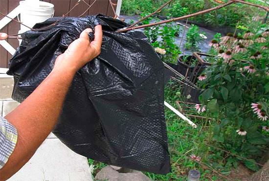 На осиное гнездо, висящее на ветке, можно просто надеть пакет с налитым в него раствором отравы.