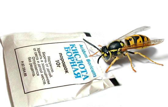 Борная кислота эффективна не только против тараканов, но и против ос.