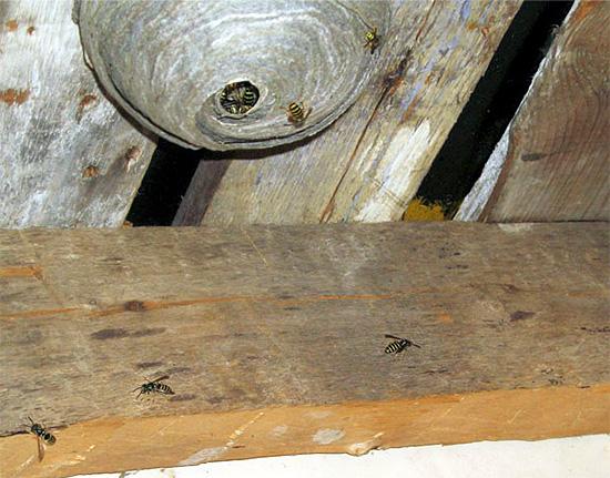 Инсектицидным гелем следует обрабатывать поверхности рядом с гнездом ос