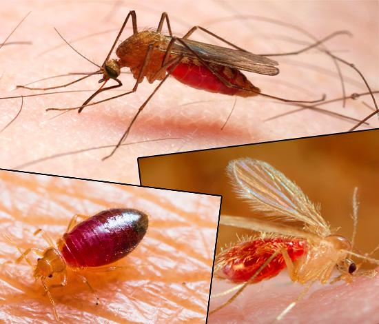 Укусы разных видов насекомых существенно отличаются друг от друга по внешнему виду, и представленные ниже фотографии наглядно это демонстрируют...
