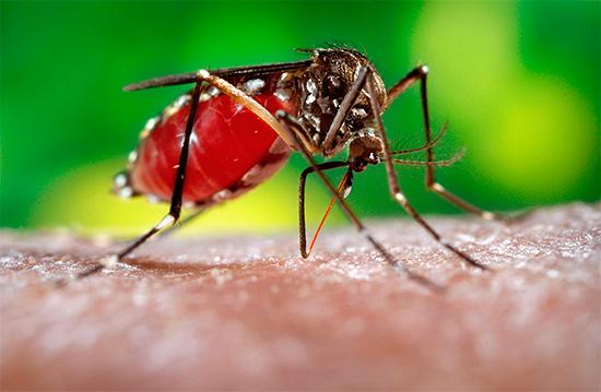 На практике некоторые приборы универсального назначения оказываются неспособны отпугнуть даже комаров...