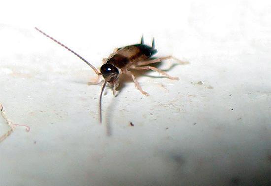 Имейте в виду, что тараканы могут появиться в помещении вновь, особенно если они есть у ваших соседей - к этому нужно заранее подготовиться и принять профилактические меры.