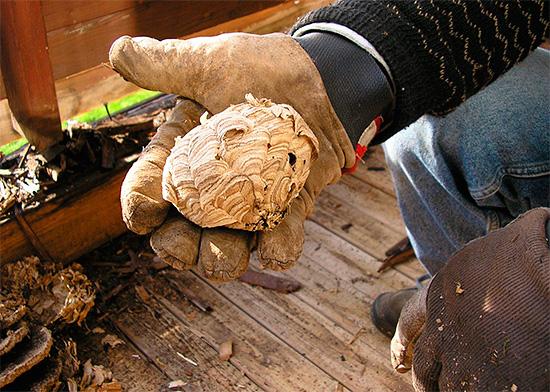 Уничтожение осиного гнезда следует производить с учетом всех правил безопасности.