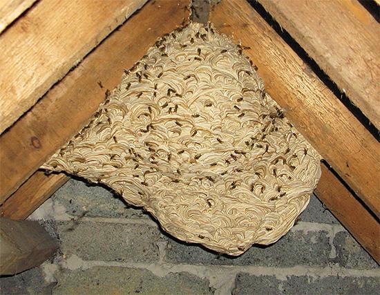 Не пытайтесь уничтожить осиное гнездо огнем, если оно расположено в деревянной постройке.