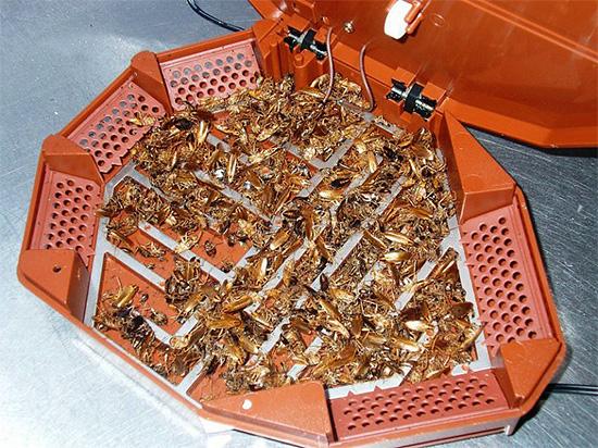 Электронные уничтожители тараканов нужно располагать в местах перемещения насекомых - в этом случае эффект от работы прибора будет максимальным.