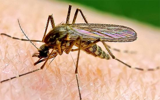 При работе ламповых уничтожителей летающих насекомых вообще не используются инсектициды.