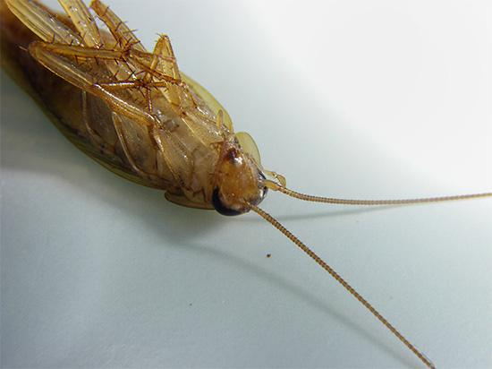 Современные инсектицидные средства в большинстве своем действуют на нервную систему насекомых, вызывая паралич и последующую гибель.