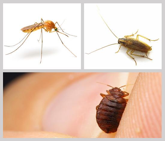 Выбрать подходящее средство от насекомых в доме, на даче или квартире - не всегда легкая задача, поэтому давайте рассмотрим этот вопрос подробнее...