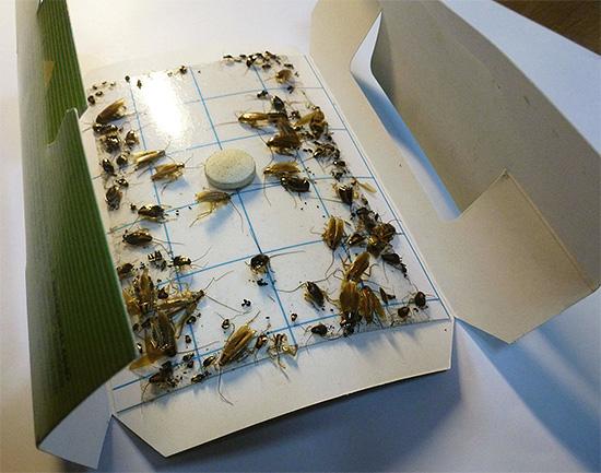 Пример клеевой ловушки для тараканов