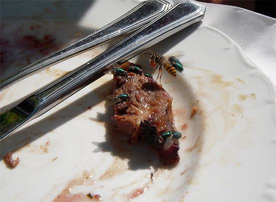 Глядя на эту фотографию, может сложиться впечатление, что осы едят и мясо.