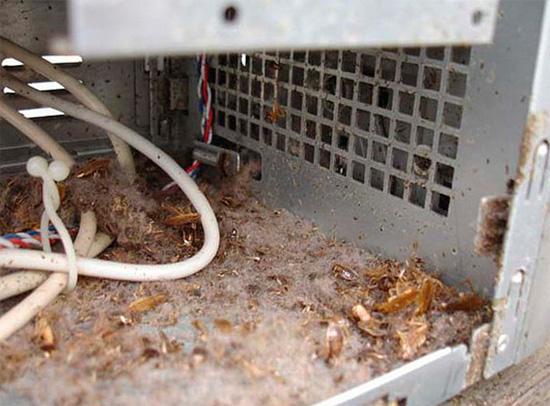 Системный блок компьютера привлекает тараканов высокой температурой и возможностью здесь укрыться.