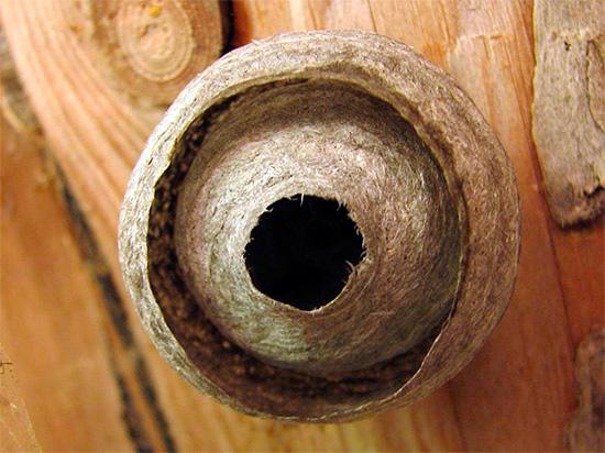 На фотографии показано осиное гнездо под крышей деревянного дома.