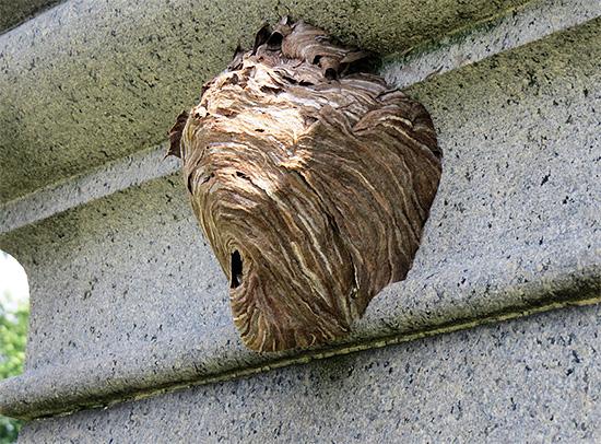 Ловушку желательно располагать в непосредственной близости от гнезда ос - так истребить насекомых получится быстрее.