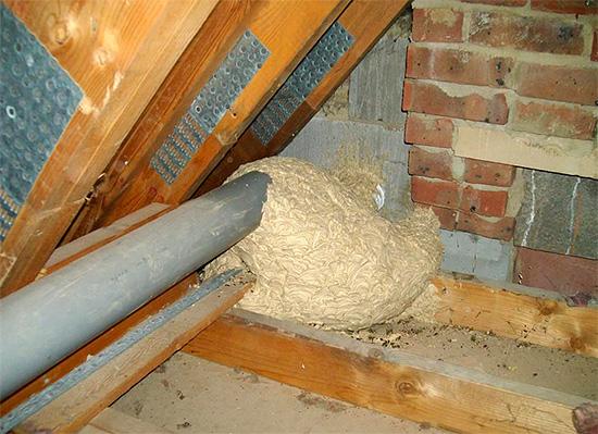 Близко приближаться к такому гнезду может быть попросту опасно для здоровья...